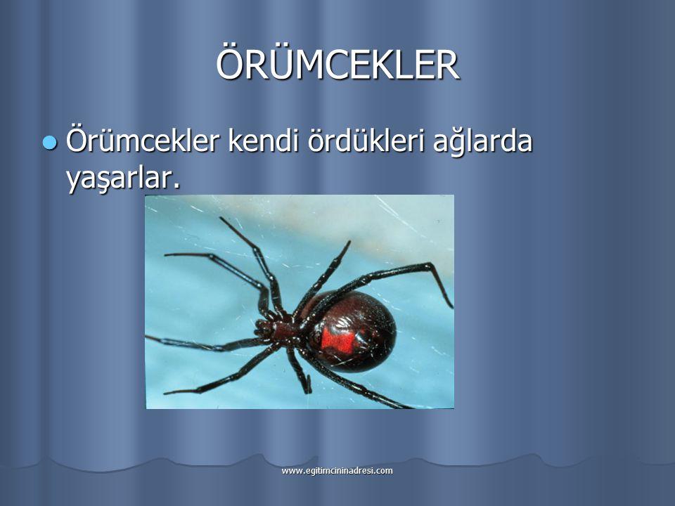 ÖRÜMCEKLER Örümcekler kendi ördükleri ağlarda yaşarlar.