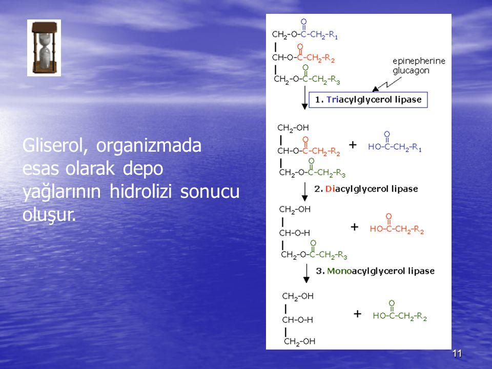 11 Gliserol, organizmada esas olarak depo yağlarının hidrolizi sonucu oluşur.