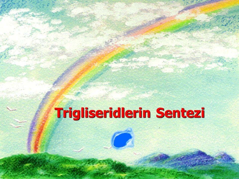 Trigliseridlerin Sentezi