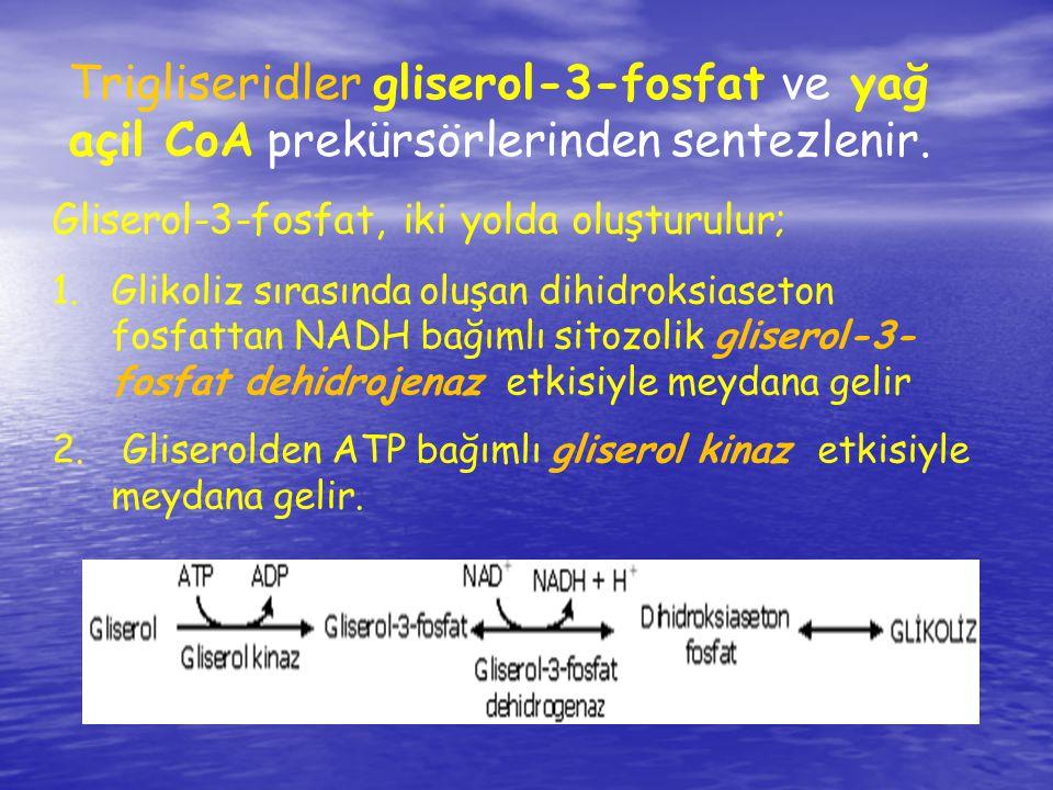 Trigliseridler gliserol-3-fosfat ve yağ açil CoA prekürsörlerinden sentezlenir. Gliserol-3-fosfat, iki yolda oluşturulur; 1.Glikoliz sırasında oluşan
