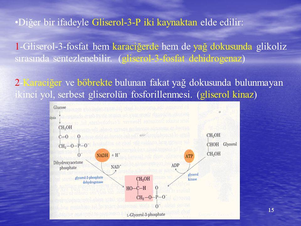 15 Diğer bir ifadeyle Gliserol-3-P iki kaynaktan elde edilir: 1-Gliserol-3-fosfat hem karaciğerde hem de yağ dokusunda glikoliz sırasında sentezlenebi