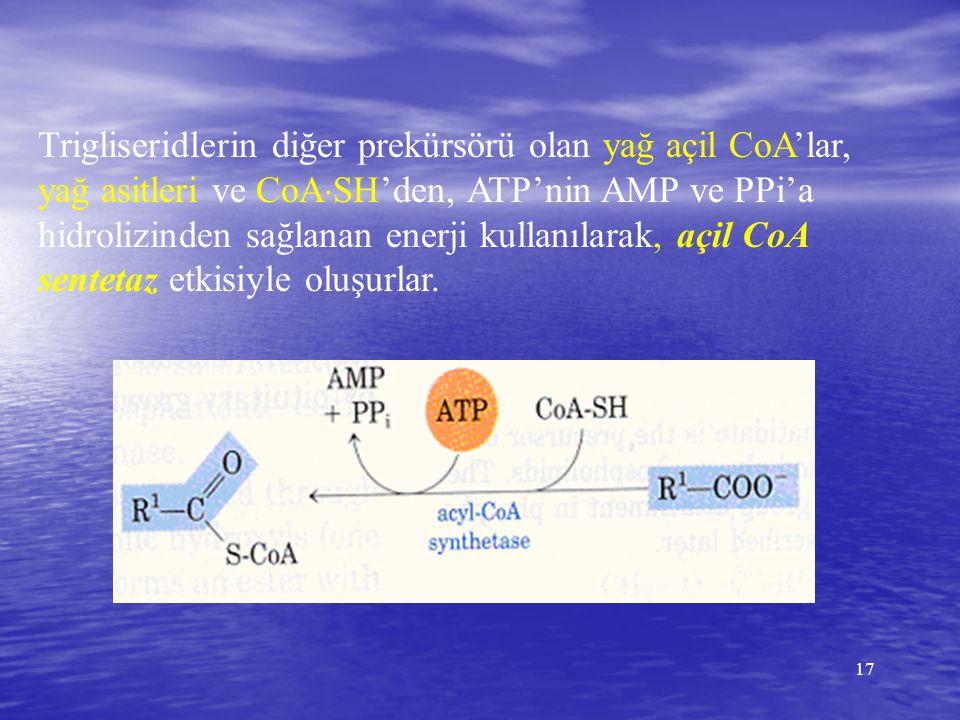 17 Trigliseridlerin diğer prekürsörü olan yağ açil CoA'lar, yağ asitleri ve CoA  SH'den, ATP'nin AMP ve PPi'a hidrolizinden sağlanan enerji kullanıla