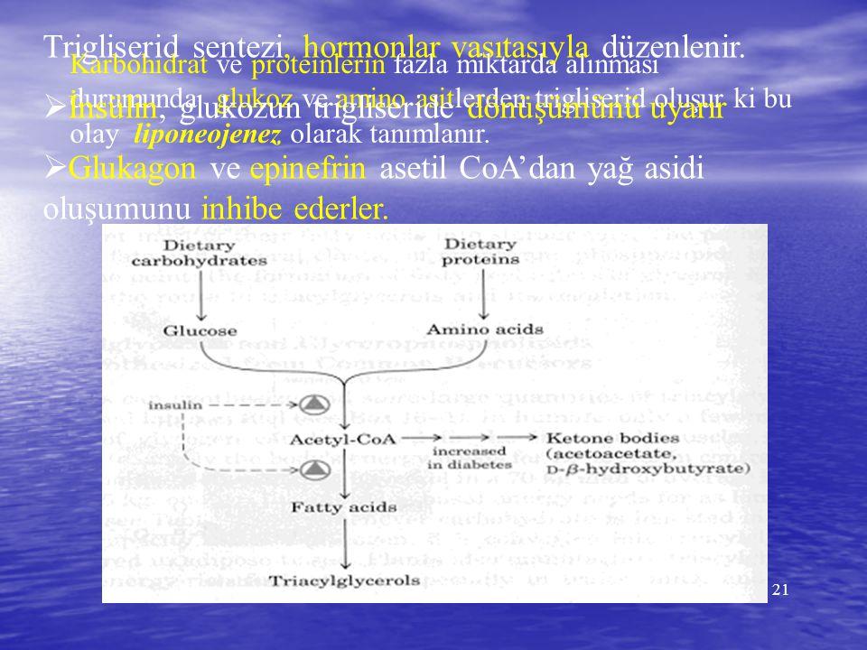 21 Karbohidrat ve proteinlerin fazla miktarda alınması durumunda glukoz ve amino asitlerden trigliserid oluşur ki bu olay liponeojenez olarak tanımlan