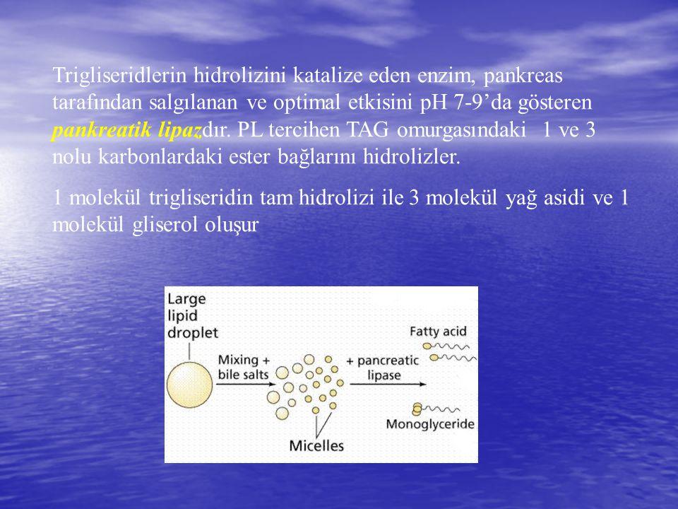 Trigliseridlerin hidrolizini katalize eden enzim, pankreas tarafından salgılanan ve optimal etkisini pH 7-9'da gösteren pankreatik lipazdır. PL tercih