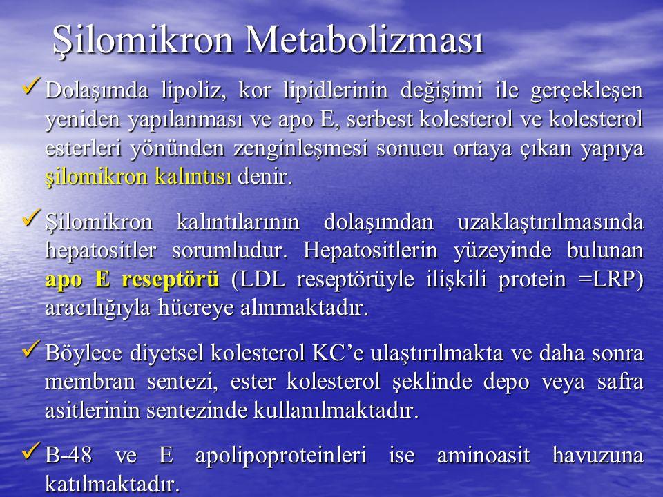 Şilomikron Metabolizması Dolaşımda lipoliz, kor lipidlerinin değişimi ile gerçekleşen yeniden yapılanması ve apo E, serbest kolesterol ve kolesterol e