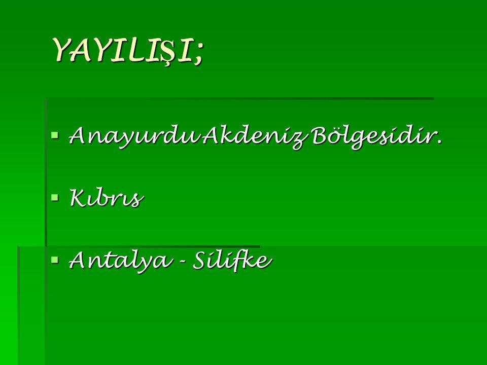 YAYILI Ş I; YAYILI Ş I;  Anayurdu Akdeniz Bölgesidir.  Kıbrıs  Antalya - Silifke
