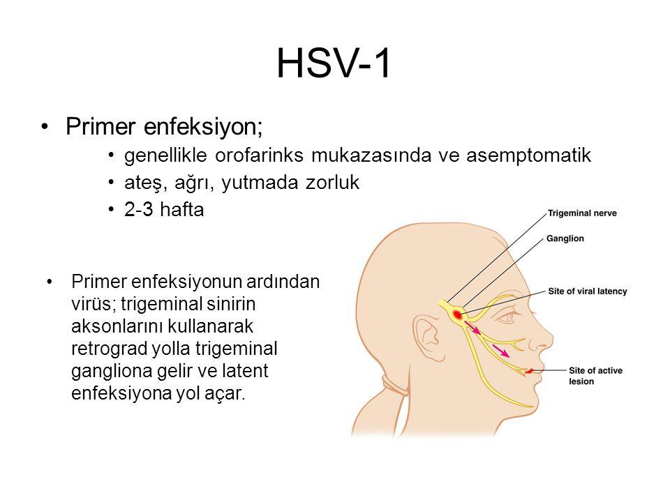 HSV-1 Primer enfeksiyon; genellikle orofarinks mukazasında ve asemptomatik ateş, ağrı, yutmada zorluk 2-3 hafta Primer enfeksiyonun ardından virüs; tr