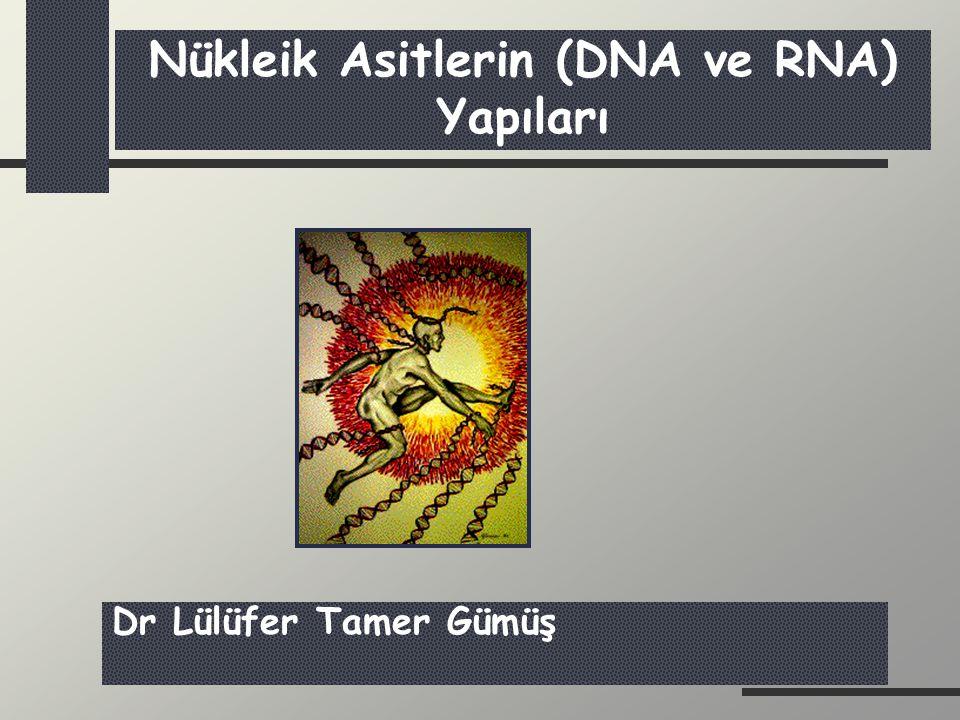 mRNA tRNA