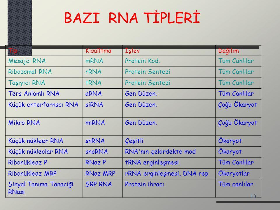 13 TipKısalltmaİşlevDağılım Mesajcı RNAmRNAProtein Kod.Tüm Canlılar Ribozomal RNArRNAProtein SenteziTüm Canlılar Taşıyıcı RNAtRNAProtein SenteziTüm Ca