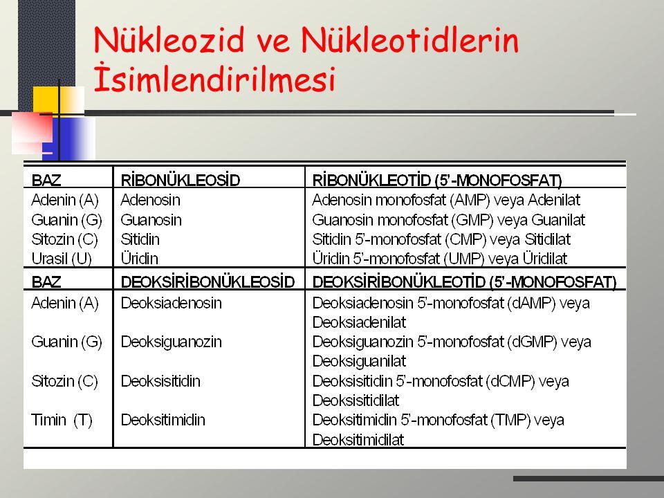 Nükleozid ve Nükleotidlerin İsimlendirilmesi