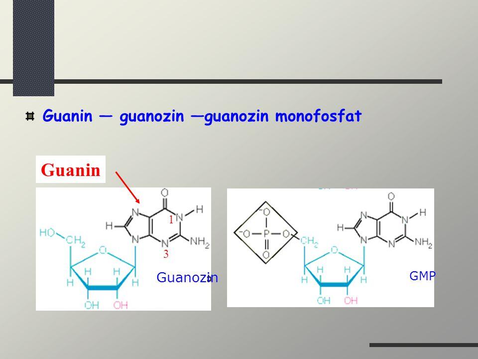 Guanin — guanozin —guanozin monofosfat Guanozin GMP Guanin 1 3