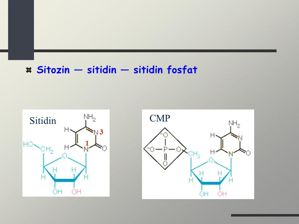 Sitozin — sitidin — sitidin fosfat 1 3 Sitidin CMP