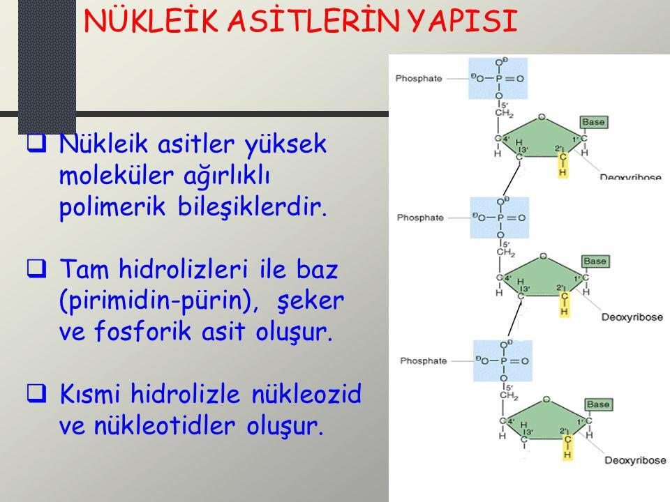  Nükleik asitler yüksek moleküler ağırlıklı polimerik bileşiklerdir.  Tam hidrolizleri ile baz (pirimidin-pürin), şeker ve fosforik asit oluşur.  K