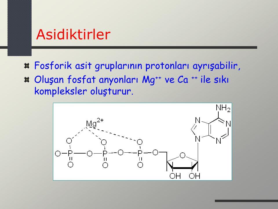 Asidiktirler Fosforik asit gruplarının protonları ayrışabilir, Oluşan fosfat anyonları Mg ++ ve Ca ++ ile sıkı kompleksler oluşturur.