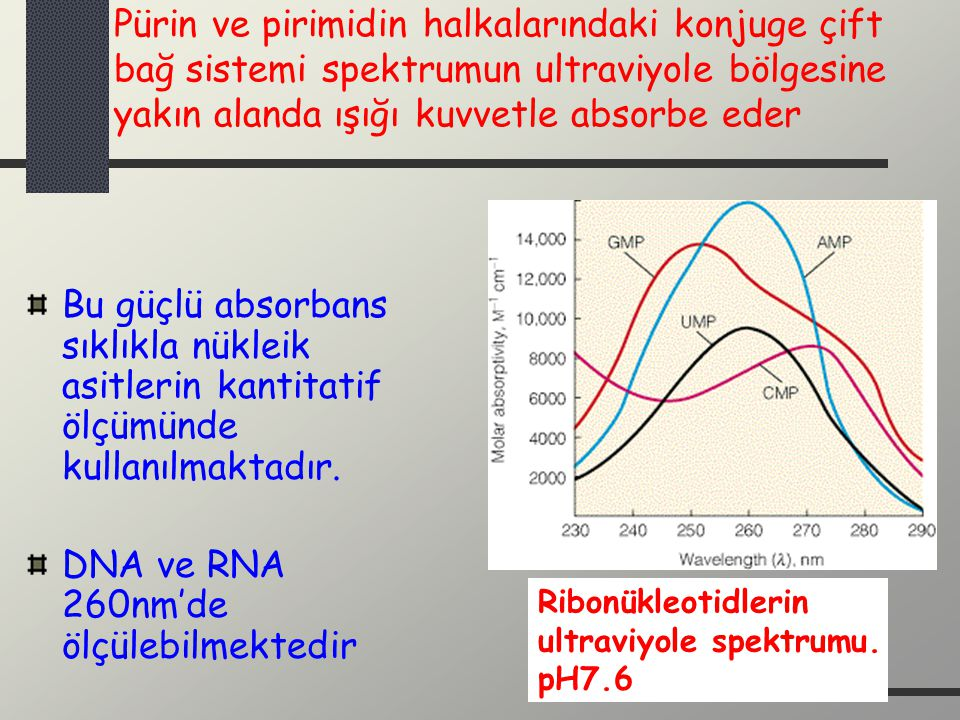 Pürin ve pirimidin halkalarındaki konjuge çift bağ sistemi spektrumun ultraviyole bölgesine yakın alanda ışığı kuvvetle absorbe eder Bu güçlü absorban
