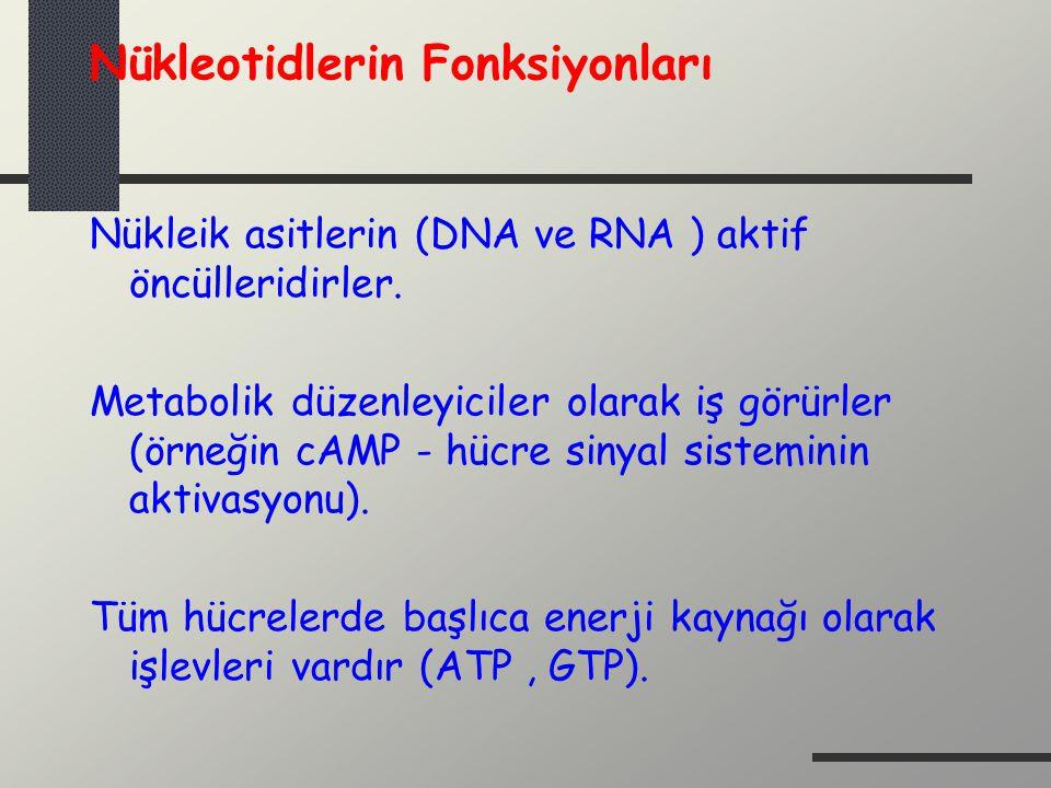 Nükleotidlerin Fonksiyonları Nükleik asitlerin (DNA ve RNA ) aktif öncülleridirler. Metabolik düzenleyiciler olarak iş görürler (örneğin cAMP - hücre