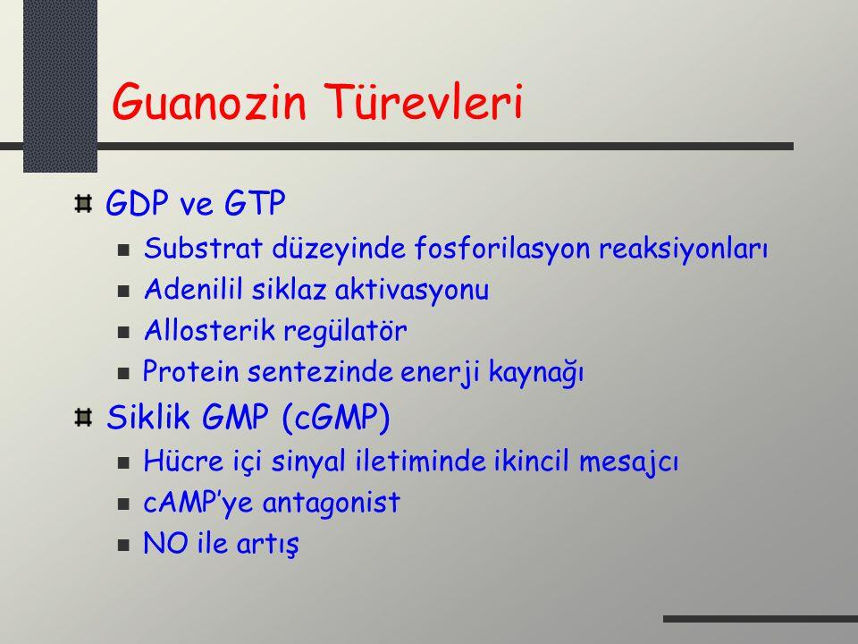 Guanozin Türevleri GDP ve GTP Substrat düzeyinde fosforilasyon reaksiyonları Adenilil siklaz aktivasyonu Allosterik regülatör Protein sentezinde enerj