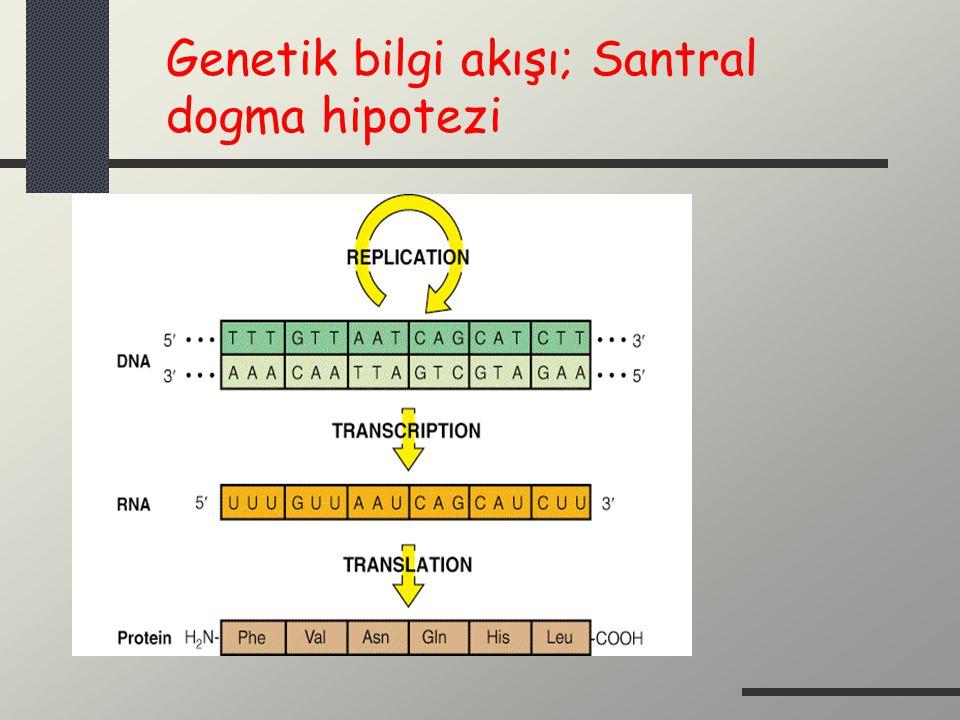 Sentetik Nükleotid Analogları İki mekanizma ile nükleotid metabolizmasına etki ederler.