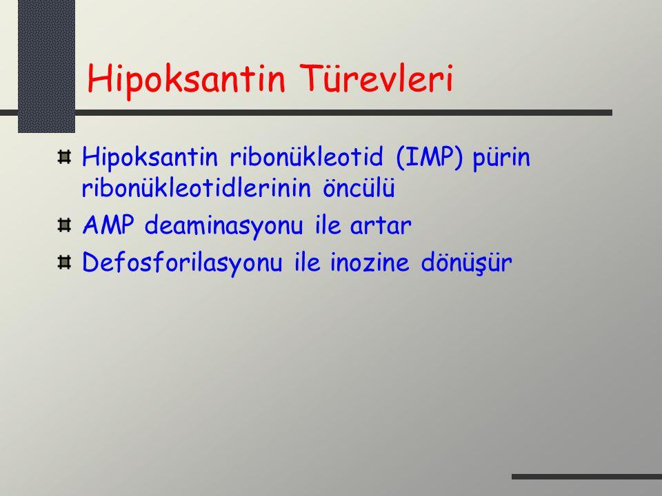 Hipoksantin Türevleri Hipoksantin ribonükleotid (IMP) pürin ribonükleotidlerinin öncülü AMP deaminasyonu ile artar Defosforilasyonu ile inozine dönüşü
