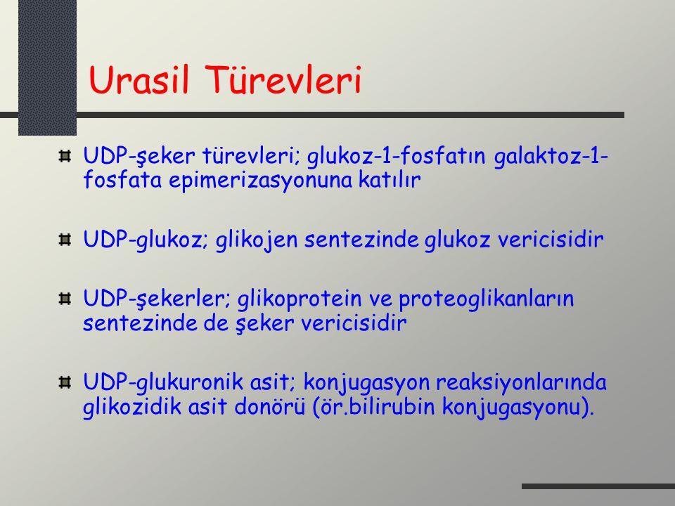 Urasil Türevleri UDP-şeker türevleri; glukoz-1-fosfatın galaktoz-1- fosfata epimerizasyonuna katılır UDP-glukoz; glikojen sentezinde glukoz vericisidi