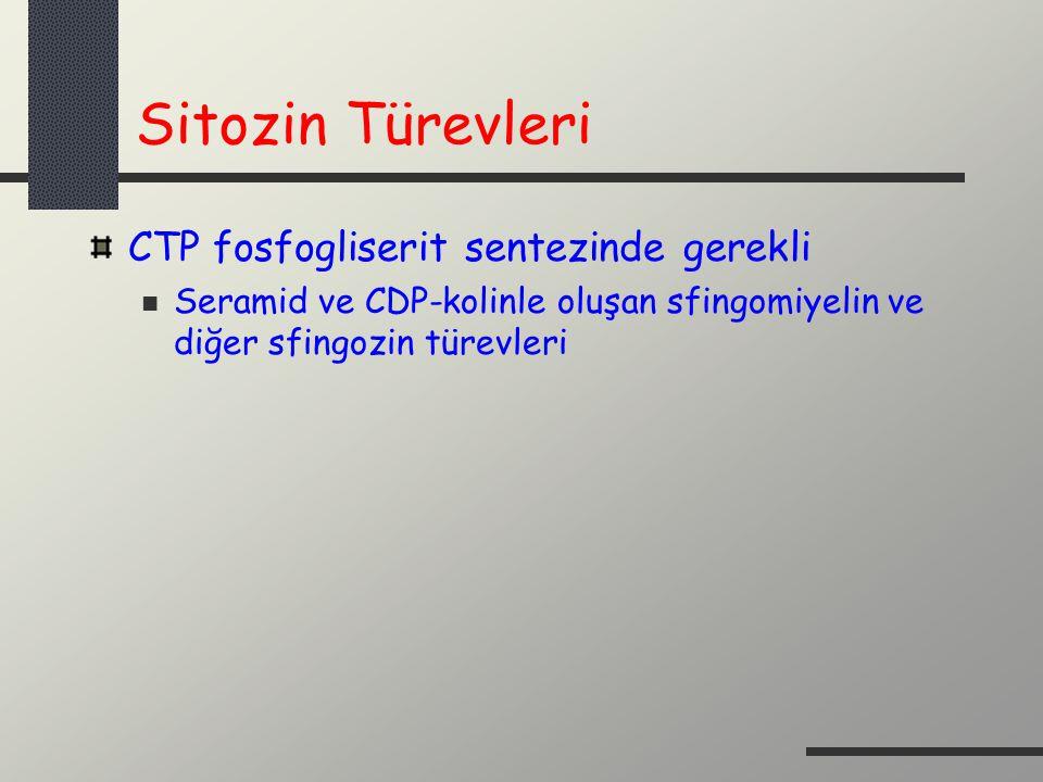 Sitozin Türevleri CTP fosfogliserit sentezinde gerekli Seramid ve CDP-kolinle oluşan sfingomiyelin ve diğer sfingozin türevleri