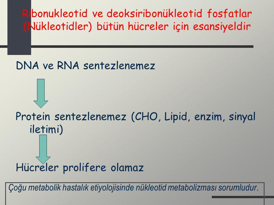 Ribonukleotid ve deoksiribonükleotid fosfatlar (Nükleotidler) bütün hücreler için esansiyeldir DNA ve RNA sentezlenemez Protein sentezlenemez (CHO, Li