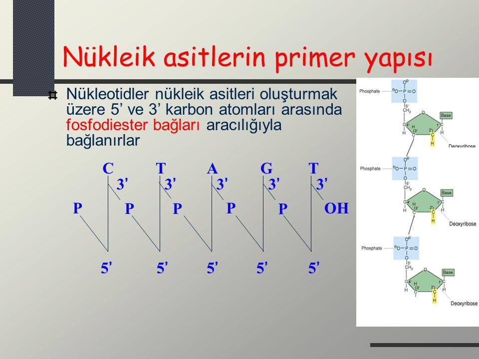 Nükleik asitlerin primer yapısı Nükleotidler nükleik asitleri oluşturmak üzere 5' ve 3' karbon atomları arasında fosfodiester bağları aracılığıyla bağ
