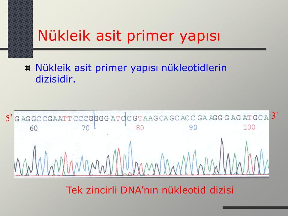 Nükleik asit primer yapısı Nükleik asit primer yapısı nükleotidlerin dizisidir. Tek zincirli DNA'nın nükleotid dizisi 5' 3'