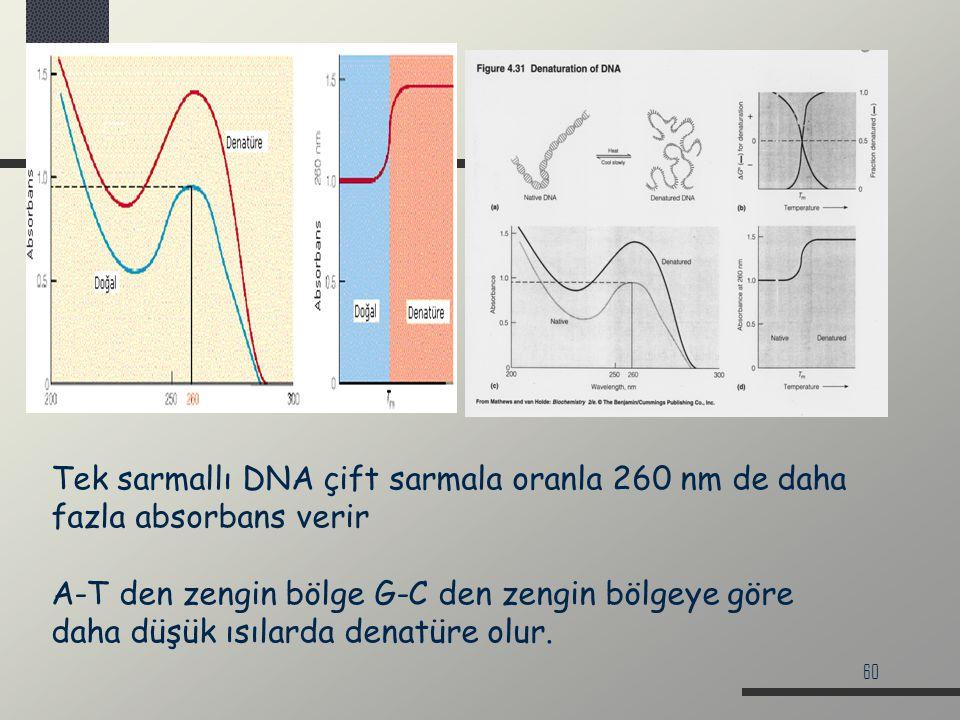 60 Tek sarmallı DNA çift sarmala oranla 260 nm de daha fazla absorbans verir A-T den zengin bölge G-C den zengin bölgeye göre daha düşük ısılarda dena
