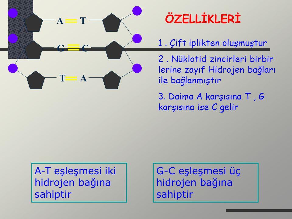 A T G C A T ÖZELLİKLERİ 1. Çift iplikten oluşmuştur 2. Nüklotid zincirleri birbir lerine zayıf Hidrojen bağları ile bağlanmıştır 3. Daima A karşısına