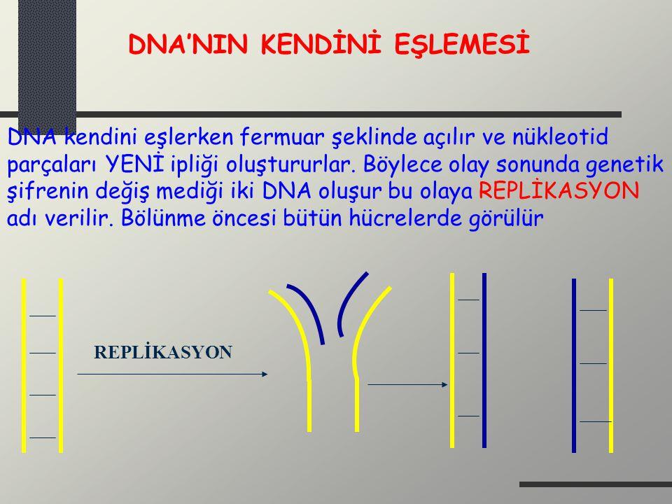 Başlıca Nükleozidler:  -N-glikosidik Pürinlerde N-9 Pirimidinlerde N-1 DNA; deoksiriboz N9 N1