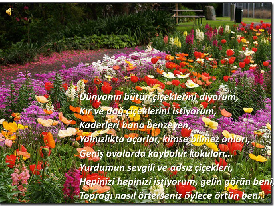 Dünyanın bütün çiçeklerini diyorum Bütün çiçekleri getirin buraya, Öğrencilerimi getirin, getirin buraya, Kaya diplerinde açmış çiğdemlere benzer Bütü