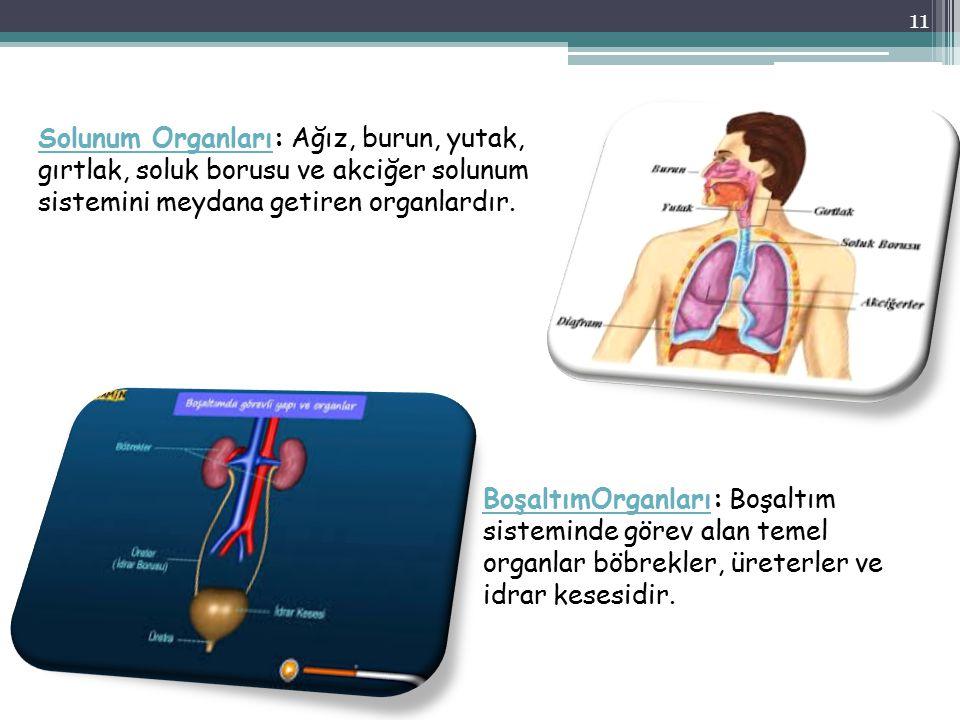BoşaltımOrganlarıBoşaltımOrganları: Boşaltım sisteminde görev alan temel organlar böbrekler, üreterler ve idrar kesesidir. Solunum OrganlarıSolunum Or