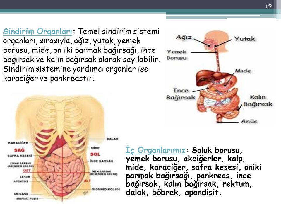 İç Organlarımızİç Organlarımız: Soluk borusu, yemek borusu, akciğerler, kalp, mide, karaciğer, safra kesesi, oniki parmak bağırsağı, pankreas, ince ba
