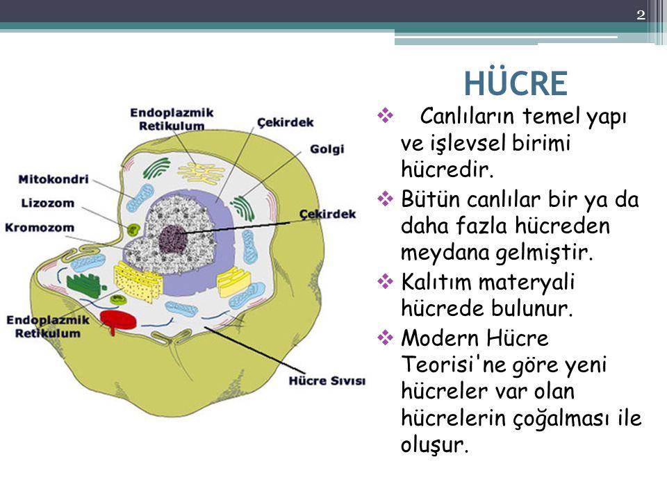 HÜCRE  Canlıların temel yapı ve işlevsel birimi hücredir.  Bütün canlılar bir ya da daha fazla hücreden meydana gelmiştir.  Kalıtım materyali hücre