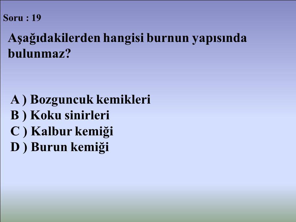 Soru : 19 Aşağıdakilerden hangisi burnun yapısında bulunmaz? A ) Bozguncuk kemikleri B ) Koku sinirleri C ) Kalbur kemiği D ) Burun kemiği