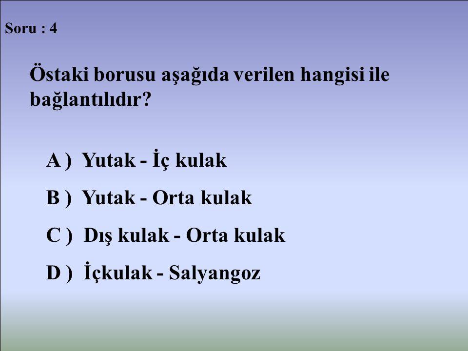 Soru : 4 Östaki borusu aşağıda verilen hangisi ile bağlantılıdır? A ) Yutak - İç kulak B ) Yutak - Orta kulak C ) Dış kulak - Orta kulak D ) İçkulak -