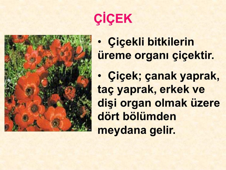 ÇİÇEK Çiçekli bitkilerin üreme organı çiçektir. Çiçek; çanak yaprak, taç yaprak, erkek ve dişi organ olmak üzere dört bölümden meydana gelir.
