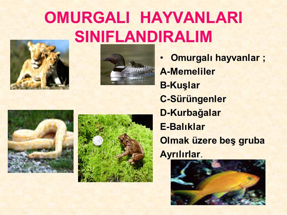 OMURGALI HAYVANLARI SINIFLANDIRALIM Omurgalı hayvanlar ; A-Memeliler B-Kuşlar C-Sürüngenler D-Kurbağalar E-Balıklar Olmak üzere beş gruba Ayrılırlar.
