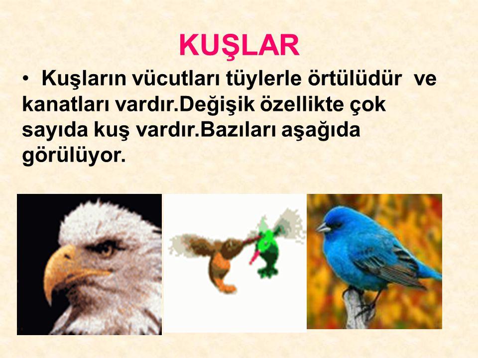 KUŞLAR Kuşların vücutları tüylerle örtülüdür ve kanatları vardır.Değişik özellikte çok sayıda kuş vardır.Bazıları aşağıda görülüyor.