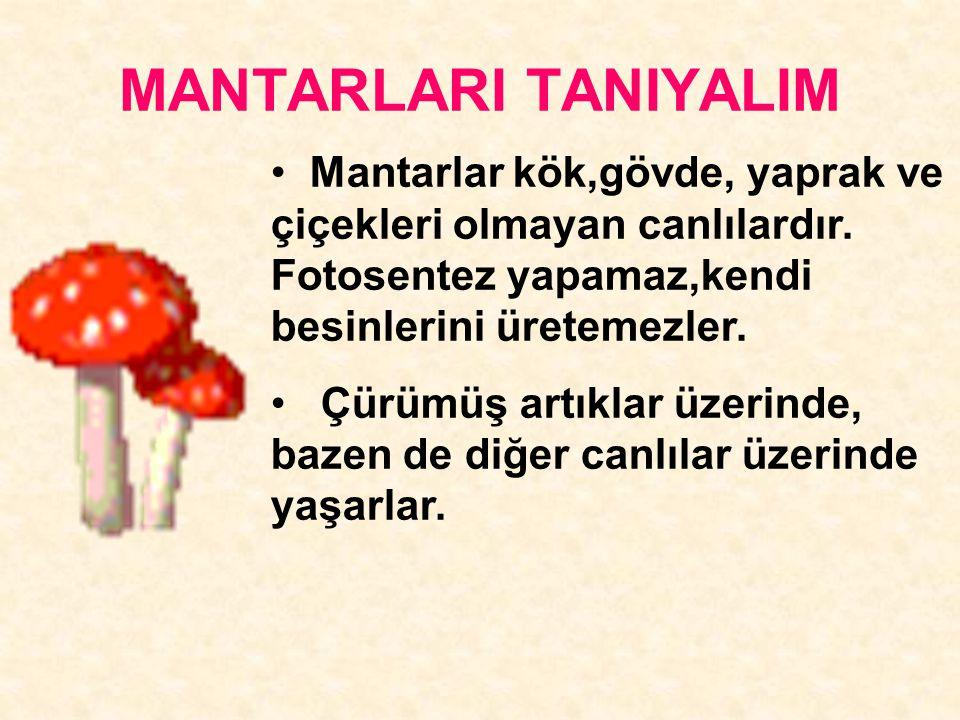 MANTARLARI TANIYALIM Mantarlar kök,gövde, yaprak ve çiçekleri olmayan canlılardır. Fotosentez yapamaz,kendi besinlerini üretemezler. Çürümüş artıklar