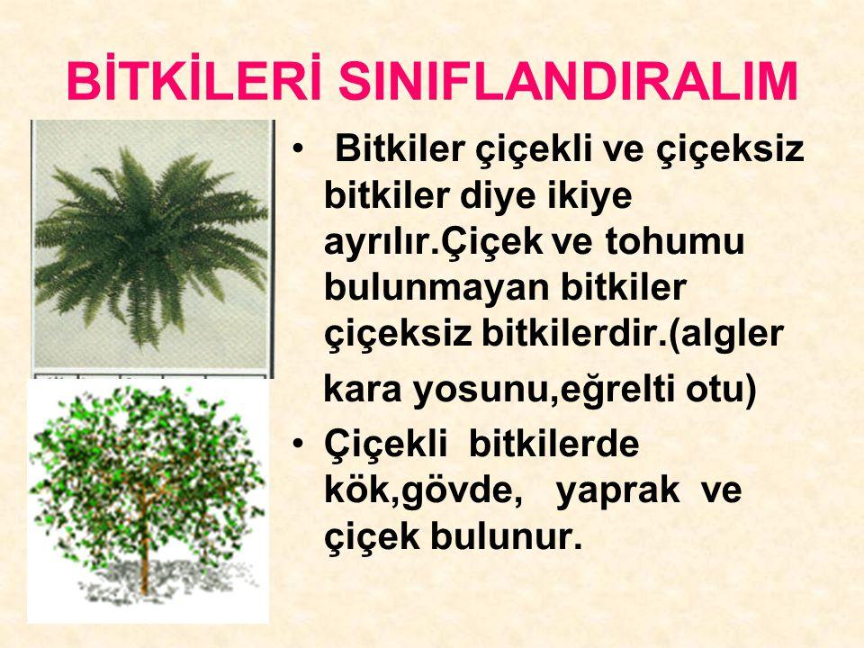 BİTKİLERİ SINIFLANDIRALIM Bitkiler çiçekli ve çiçeksiz bitkiler diye ikiye ayrılır.Çiçek ve tohumu bulunmayan bitkiler çiçeksiz bitkilerdir.(algler ka