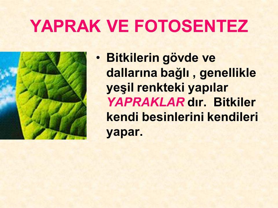 YAPRAK VE FOTOSENTEZ Bitkilerin gövde ve dallarına bağlı, genellikle yeşil renkteki yapılar YAPRAKLAR dır. Bitkiler kendi besinlerini kendileri yapar.