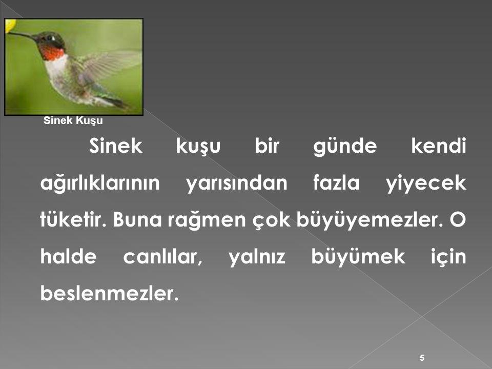 Sinek kuşu bir günde kendi ağırlıklarının yarısından fazla yiyecek tüketir. Buna rağmen çok büyüyemezler. O halde canlılar, yalnız büyümek için beslen