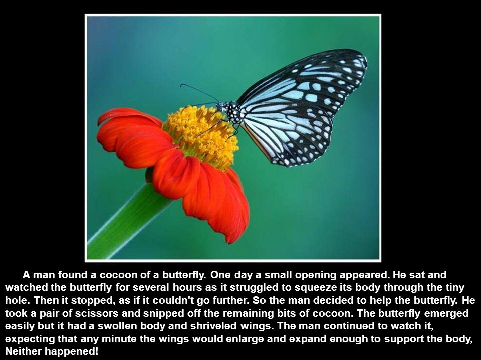 The story of the butterfly