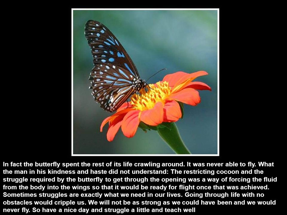 A man found a cocoon of a butterfly. One day a small opening appeared.
