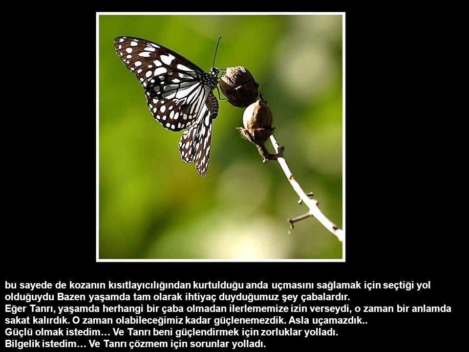 Çünkü her an kelebeğin kanatlarının açılıp genişleyeceğini ve bedenini taşıyacak kadar güçleneceğini umuyordu. Ama bunlardan hiç biri olmadı! Kelebek,