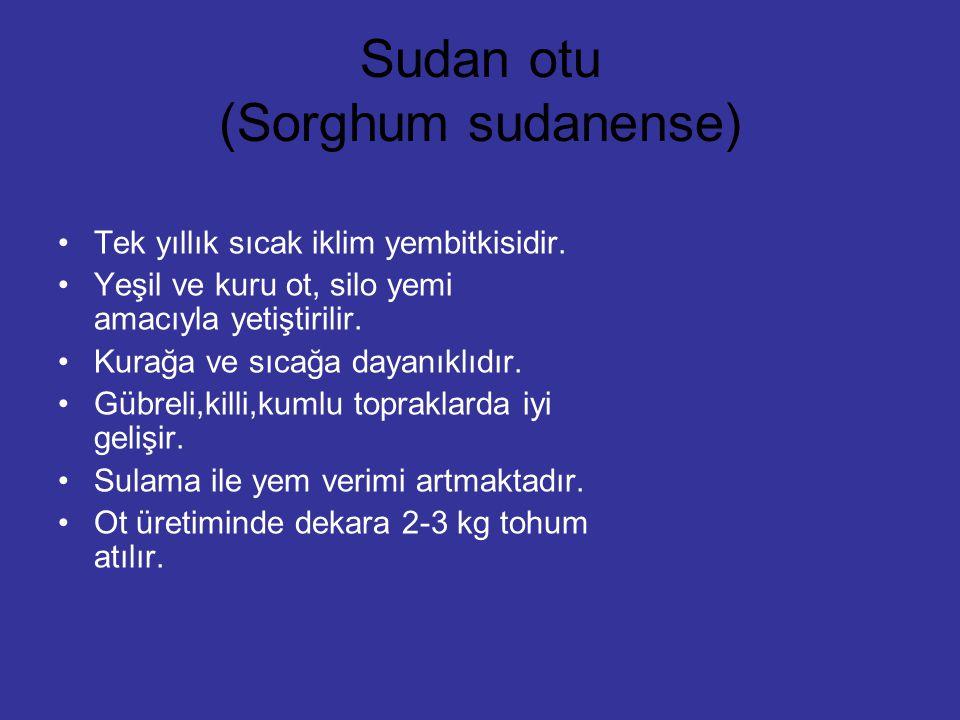 Sudan otu (Sorghum sudanense) Tek yıllık sıcak iklim yembitkisidir. Yeşil ve kuru ot, silo yemi amacıyla yetiştirilir. Kurağa ve sıcağa dayanıklıdır.