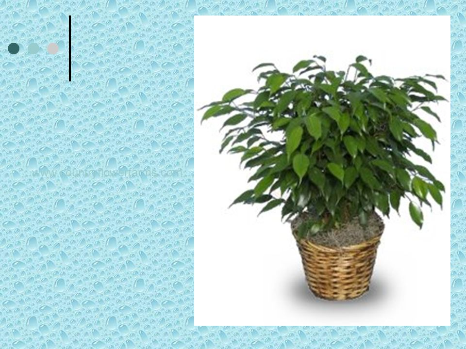 www.countryflowerfarms.com