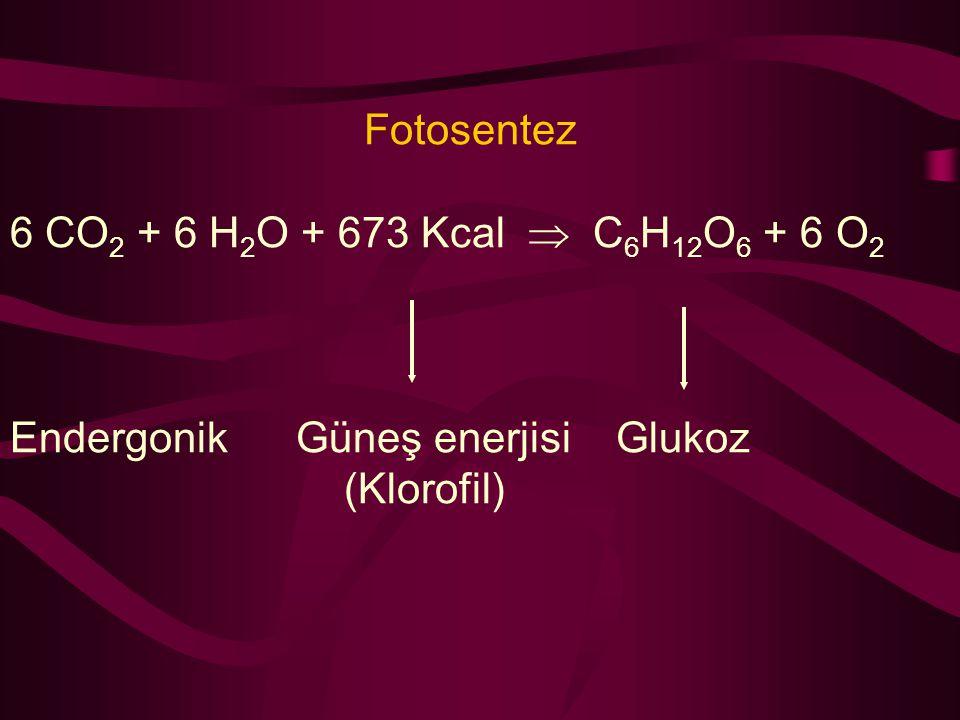 Fotosentez 6 CO 2 + 6 H 2 O + 673 Kcal  C 6 H 12 O 6 + 6 O 2 Endergonik Güneş enerjisi Glukoz (Klorofil)